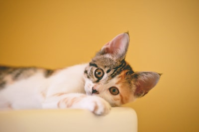 FourFour Two – What is an average cat lifespan?