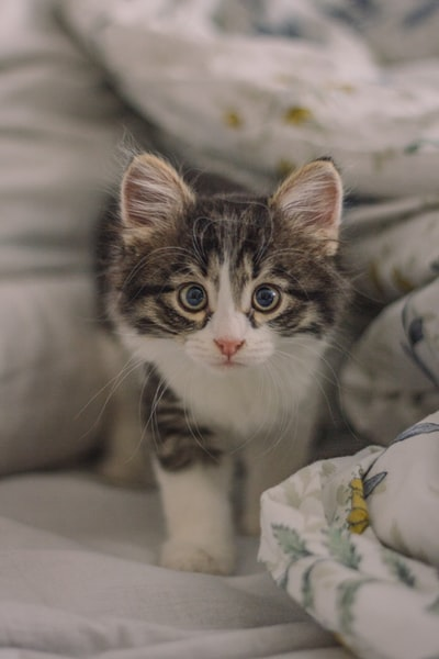 Cat poop: What to look for, and how to treat