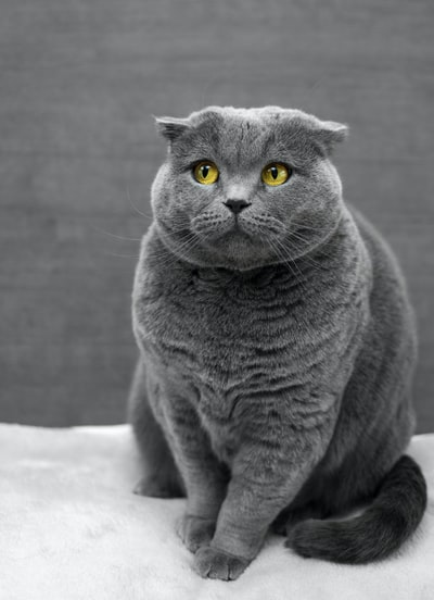 Why do cats get diarrhea and constipation?